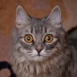 scared frighten fear cat