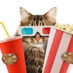 cat popcorn movie film hollywood 3d gkasses