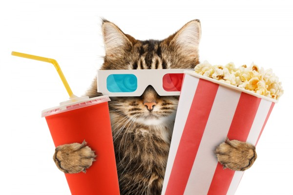 http://betanews.com/wp-content/uploads/2013/01/cat-popcorn-movie-film-hollywood-3d-gkasses-600x399.jpg