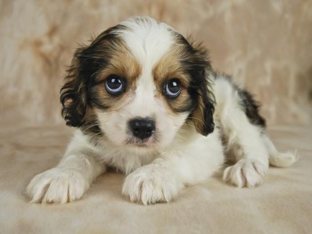sad sorry puppy dog
