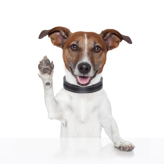 waving dog goodbye
