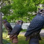 Owlrs