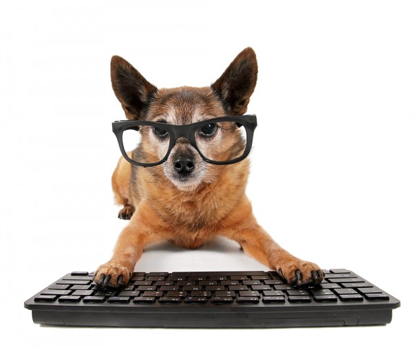 Woof Woof Puppy Linux Reaches Version 6 0 Fetch It Now