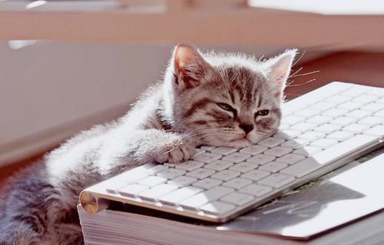 bored-cat