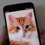Nexus 6 and Cat