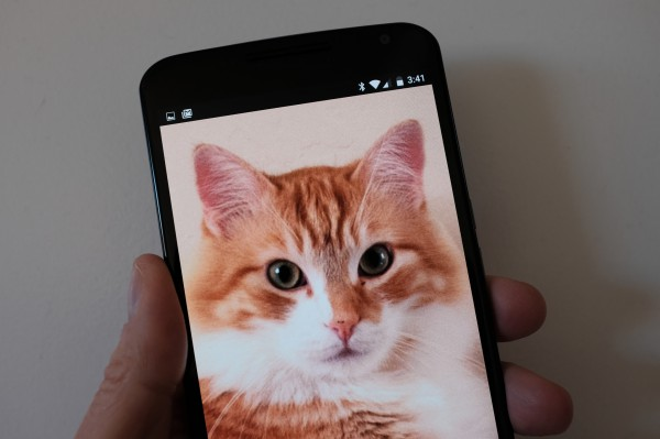 Nexus 6 and Cat