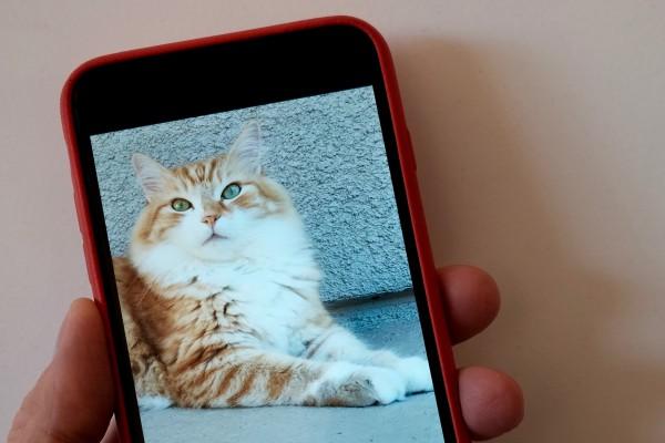 iPhone 6 Plus and Neko
