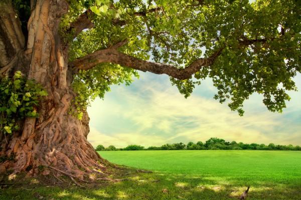 tree-green-environment