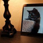 Cat and Nexus 9