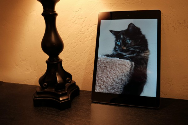Cat and Nexus 9