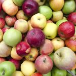 multi_colored_apples