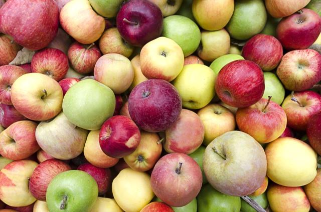 multi_colored_apples
