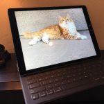 Cat and iPad Pro