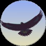 EagleMode.200.175