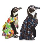 penguincouple
