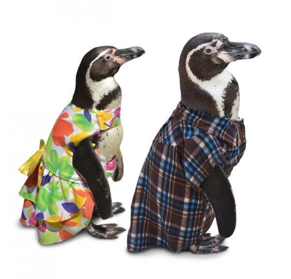 penguincouple