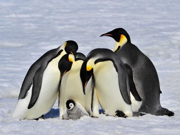 PenguinsLinuxSnasUbuntu