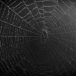 dark-web-spider-web