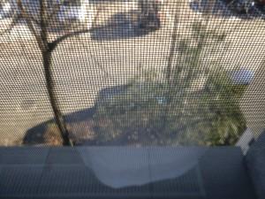 OnePlus 3T camera sample 5