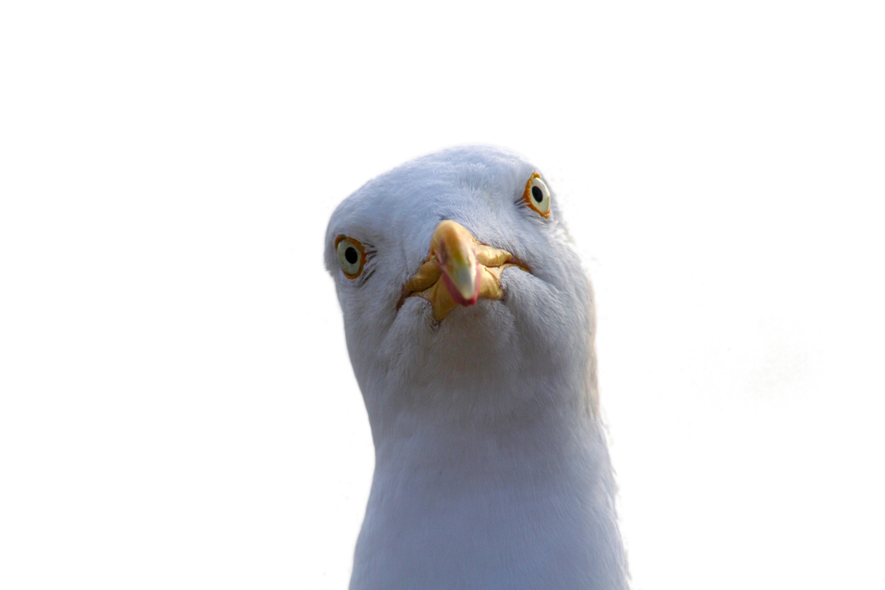 Anonymous launches a new operation to stop seagull genocide seagull altavistaventures Image collections