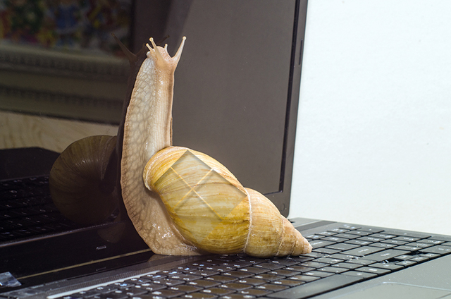 Windows 10 snail
