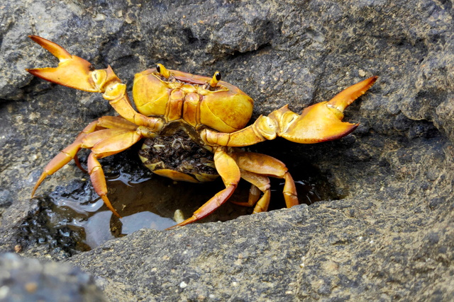 BitDefender releases free decryption tool for GandCrab ransomware