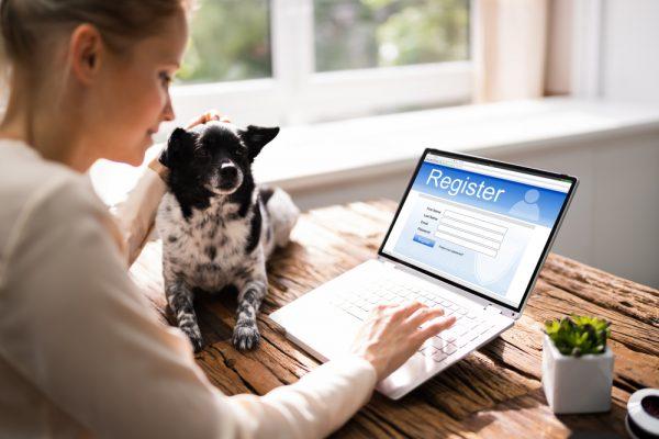 Dog laptop password