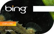 Microsoft Bing top story badge